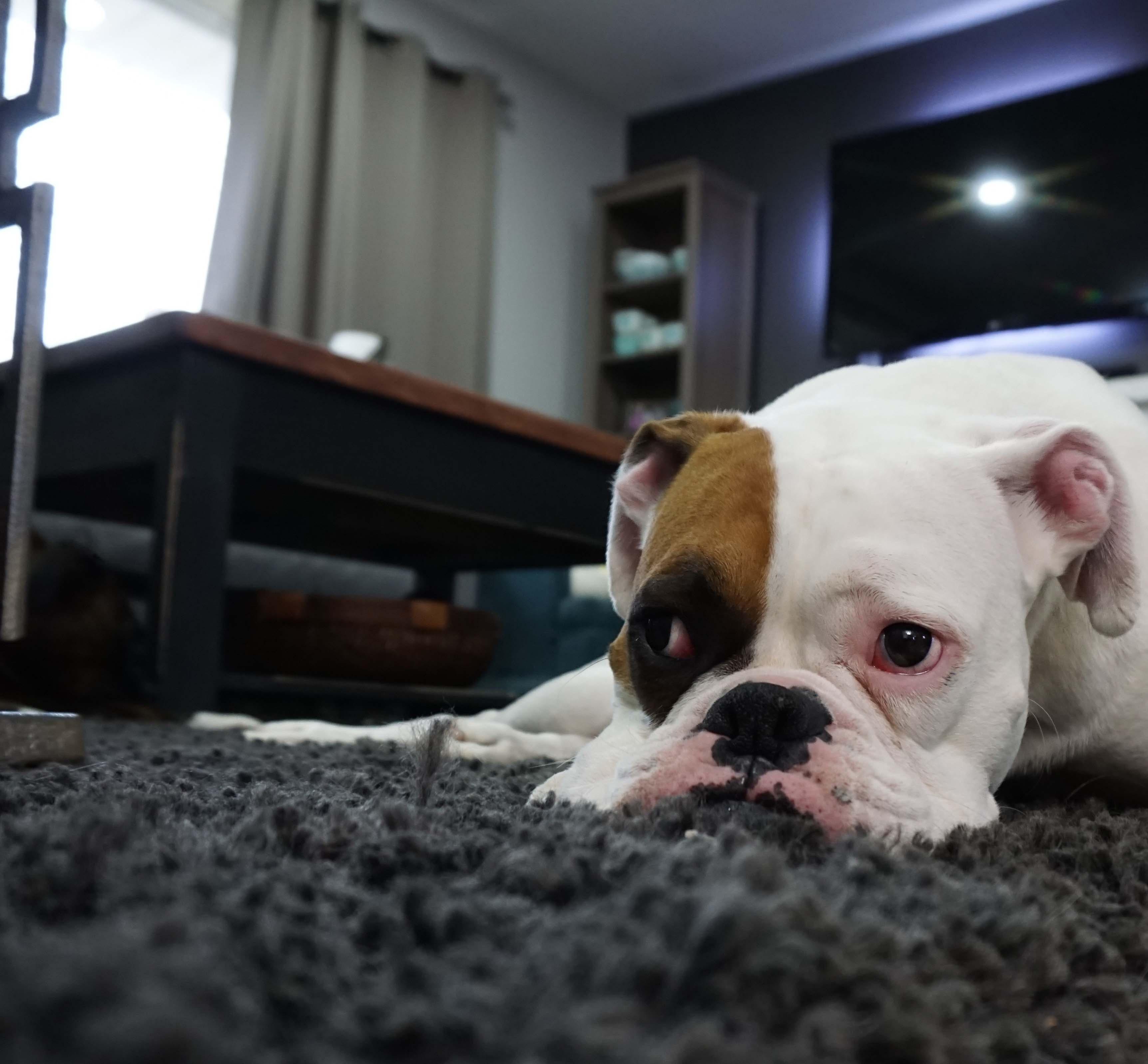 Local Carpet Cleaner in Carmichael